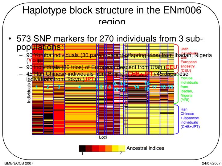 Haplotype block structure in the ENm006 region