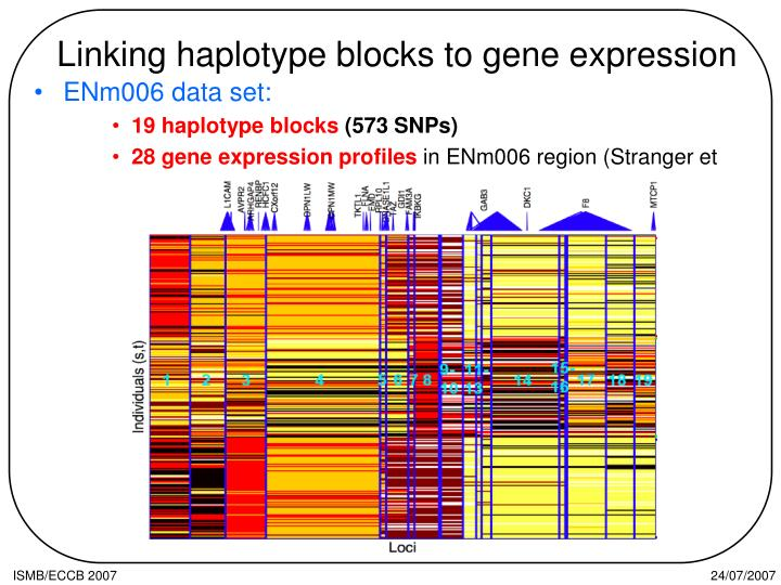 Linking haplotype blocks to gene expression