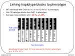 linking haplotype blocks to phenotype