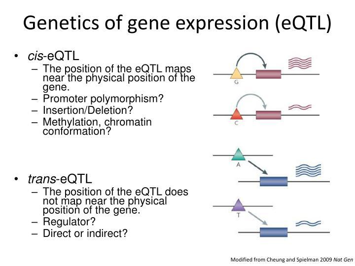 Genetics of gene expression (