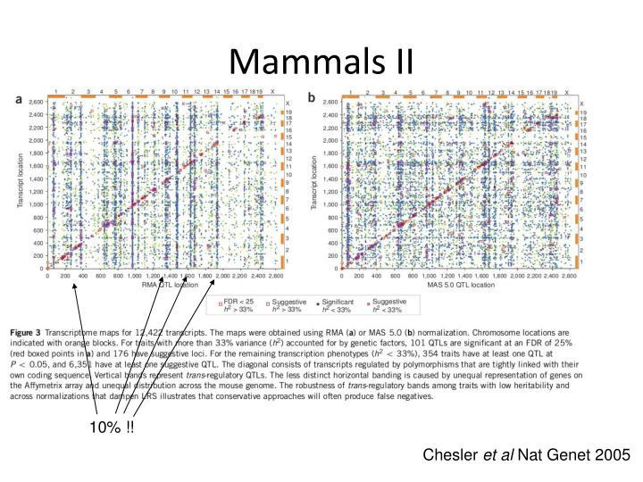 Mammals II