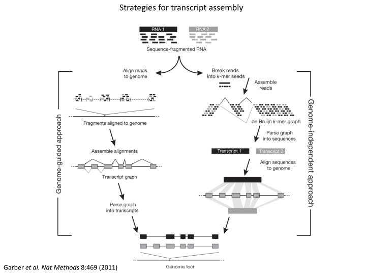 Strategies for transcript assembly