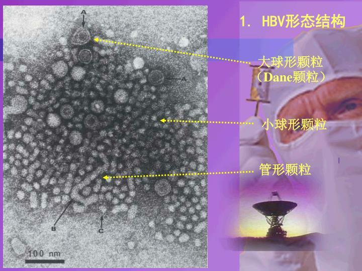 1. HBV