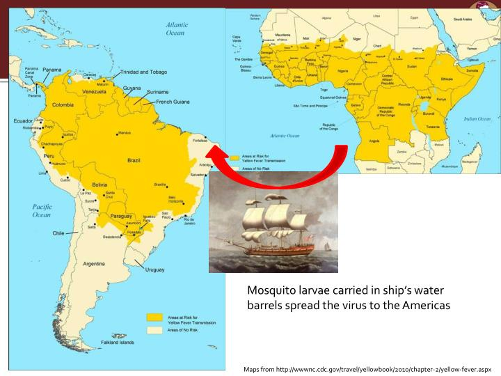 Mosquito larvae carried in ship's water barrels spread the virus to the Americas