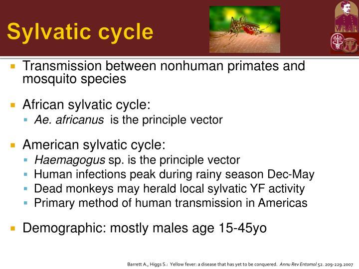 Sylvatic cycle