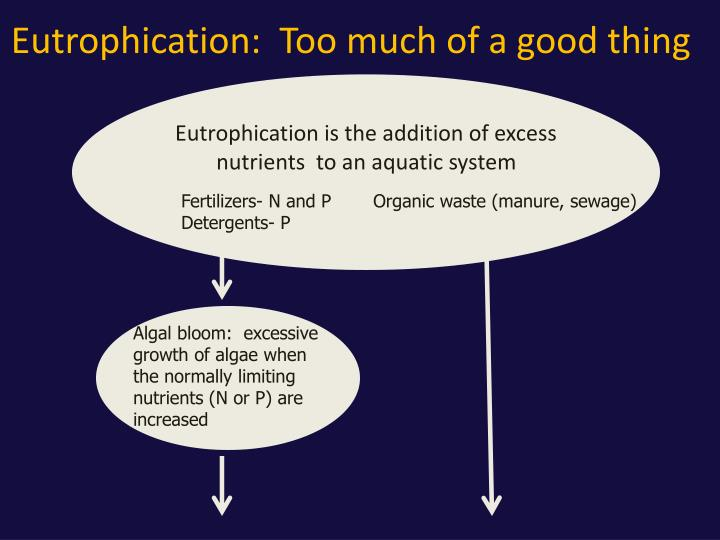Eutrophication:  Too much of a good thing