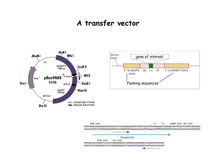 A transfer vector