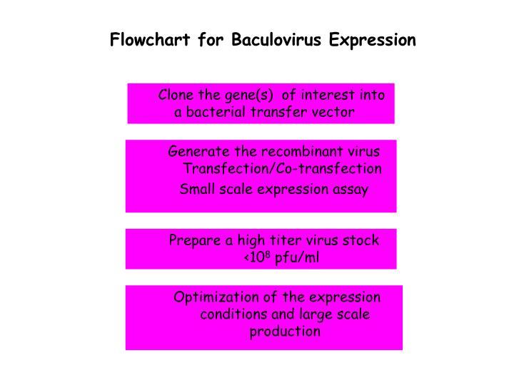 Flowchart for Baculovirus Expression