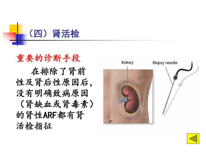 (四)肾活检