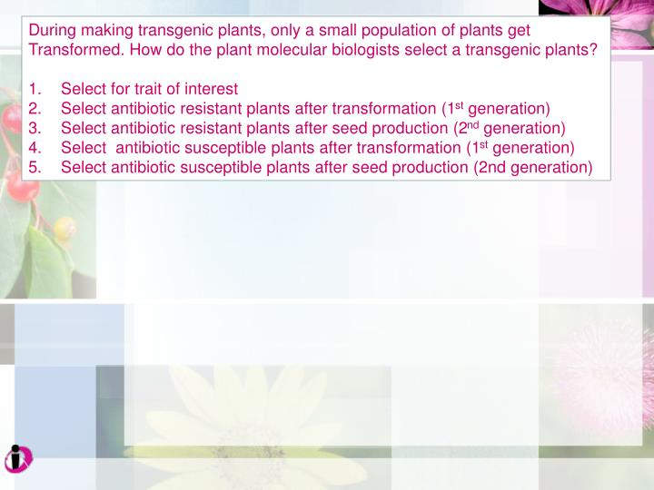 During making transgenic plants, only a small population of plants get