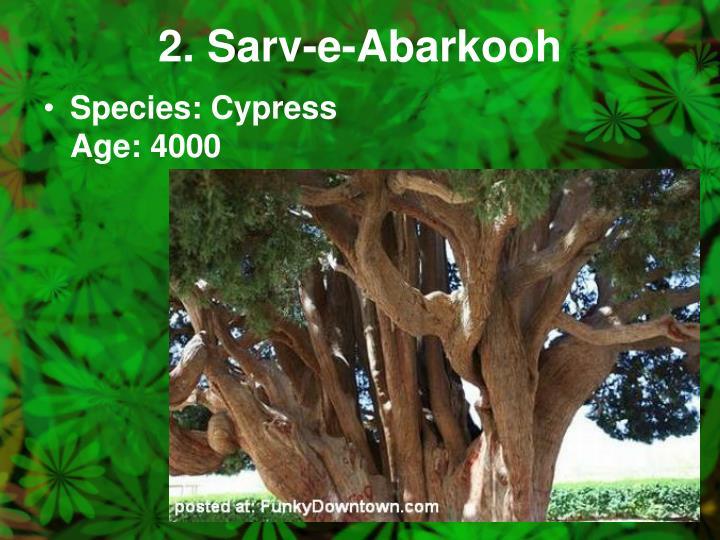 2. Sarv-e-Abarkooh