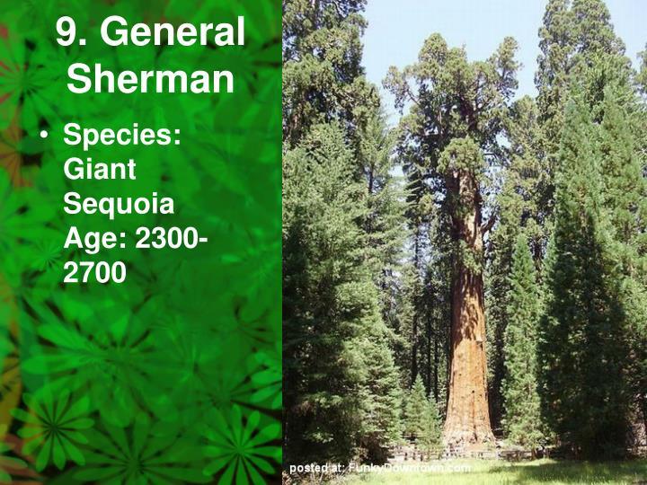 9. General Sherman