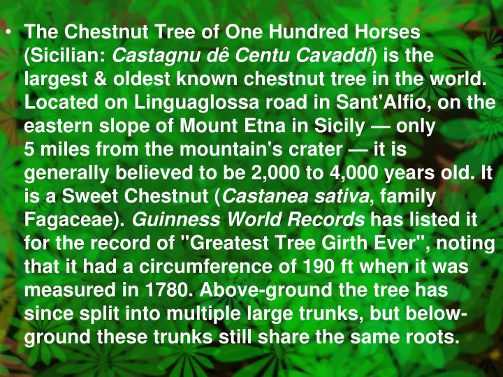 The Chestnut Tree of One Hundred Horses (Sicilian: