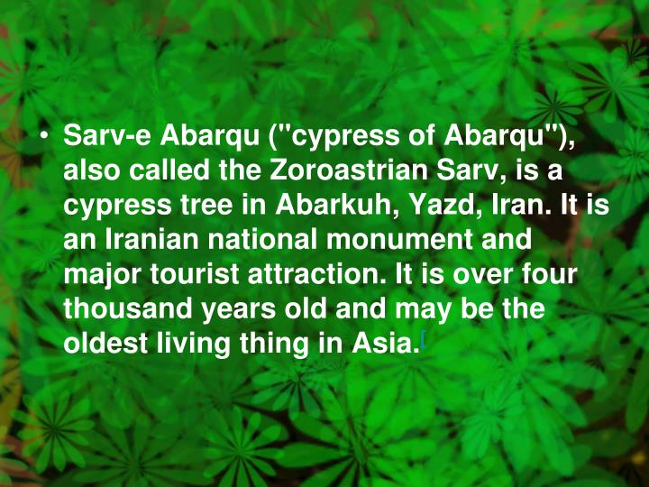 """Sarv-e Abarqu (""""cypress of Abarqu""""), also called the Zoroastrian Sarv, is a cypress tree in Abarkuh, Yazd, Iran. It is an Iranian national monument and major tourist attraction. It is over four thousand years old and may be the oldest living thing in Asia."""