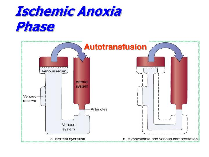 Ischemic Anoxia Phase