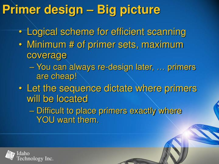 Primer design – Big picture