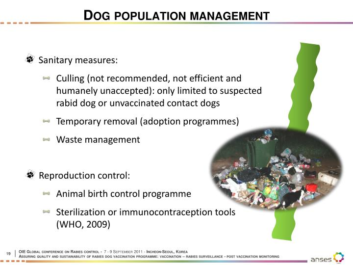 Dog population management