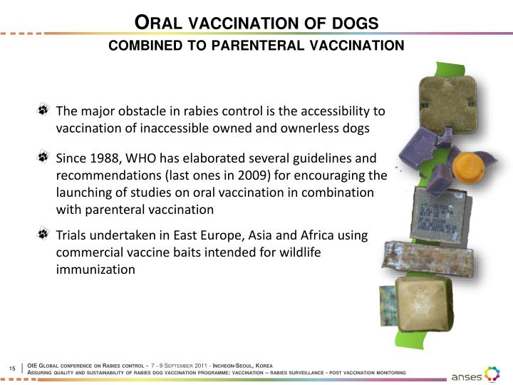 Oral vaccination of dogs