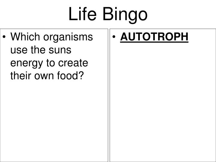 Which organisms use the suns energy to create their own food?