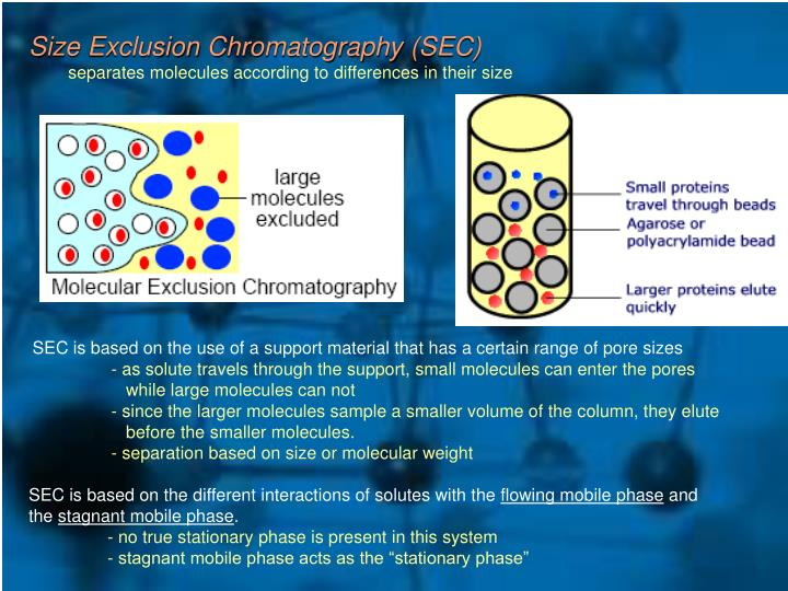 Size Exclusion Chromatography (SEC)