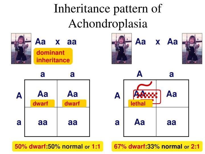 Inheritance pattern of Achondroplasia