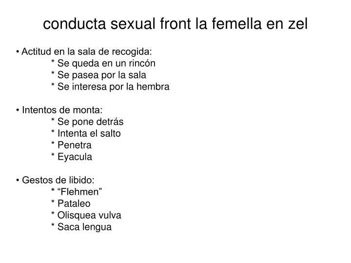 conducta sexual front la femella en zel
