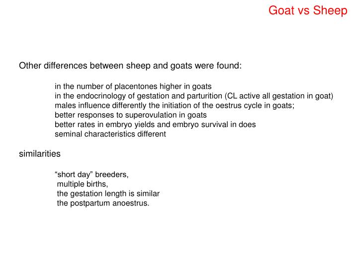 Goat vs Sheep