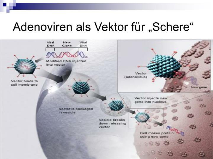 """Adenoviren als Vektor für """"Schere"""""""