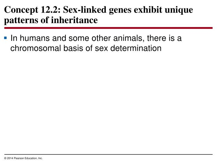 Concept 12.2: Sex-linked genes exhibit unique patterns of inheritance