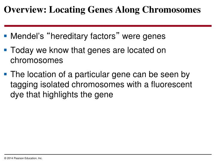 Overview locating genes along chromosomes