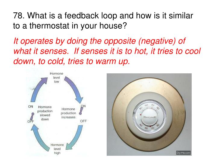 78. What is a feedback loop and how is it similar to a thermostat in your house?