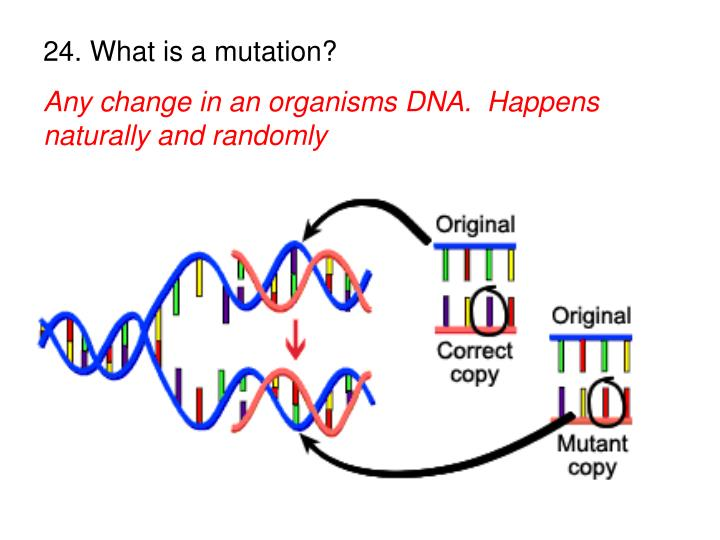 24. What is a mutation?