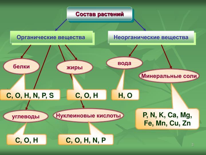 Состав растений