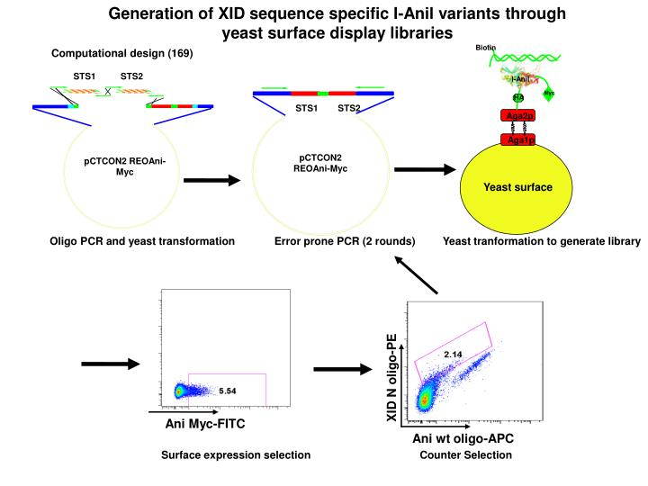 Generation of XID sequence specific I-Anil variants through yeast surface display libraries