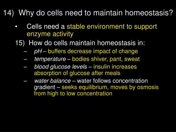 14)  Why do cells need to maintain homeostasis?