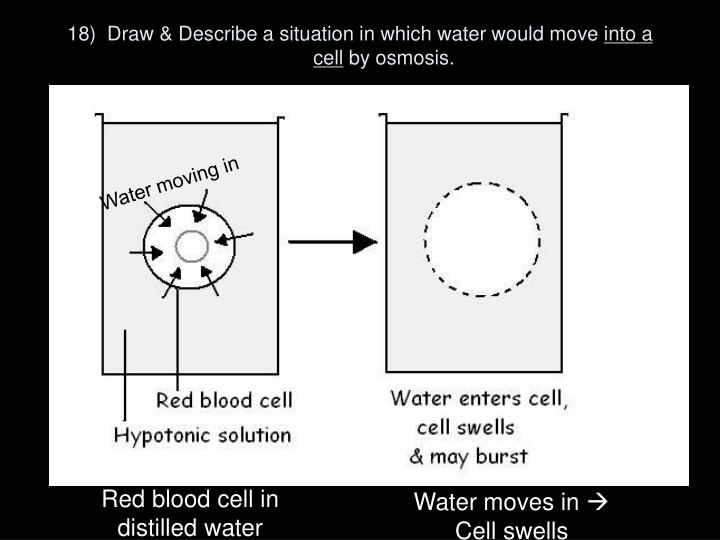 18)  Draw & Describe a situation in which water would move