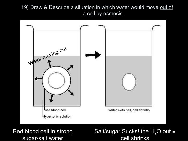 19) Draw & Describe a situation in which water would move