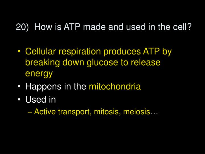 20)  How is ATP made and used in the cell?