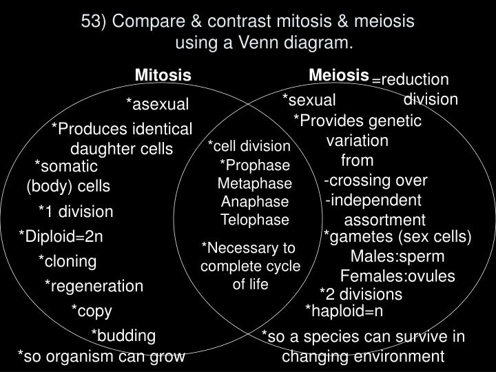 53) Compare & contrast mitosis & meiosis