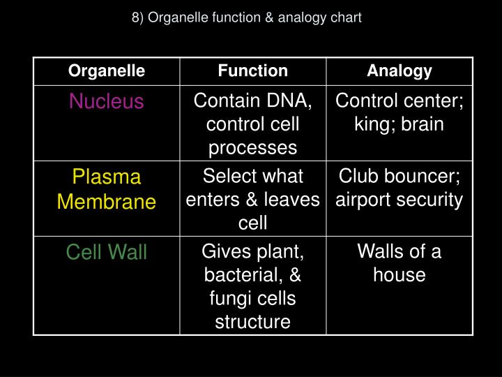 8) Organelle function & analogy chart
