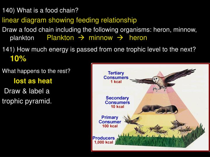 140) What is a food chain?