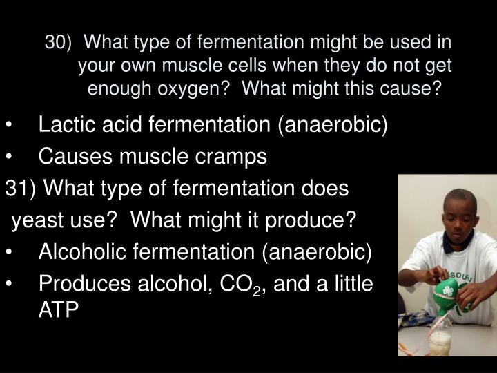 30)  What type of fermentation might be used in your own muscle cells when they do not get enough oxygen?  What might this cause?