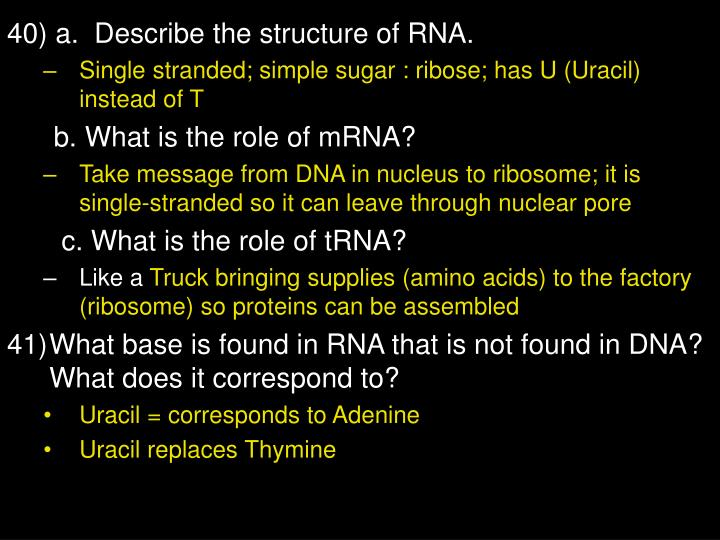 40) a.  Describe the structure of RNA.