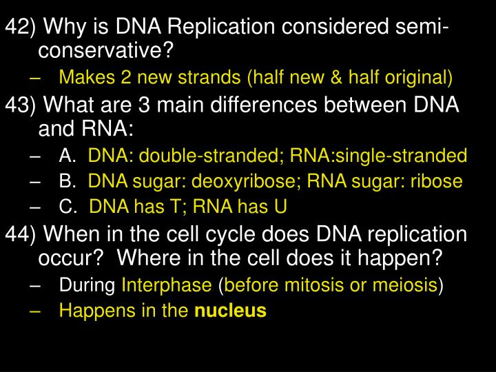 42) Why is DNA Replication considered semi-conservative?