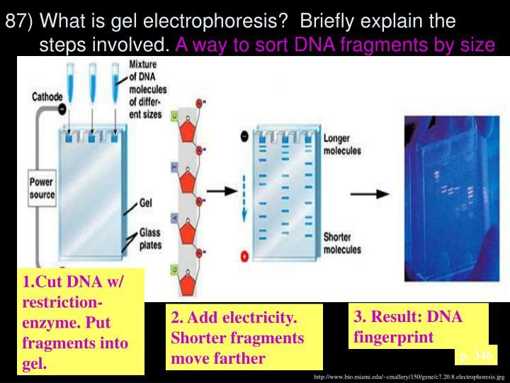 87) What is gel electrophoresis?  Briefly explain the steps involved.