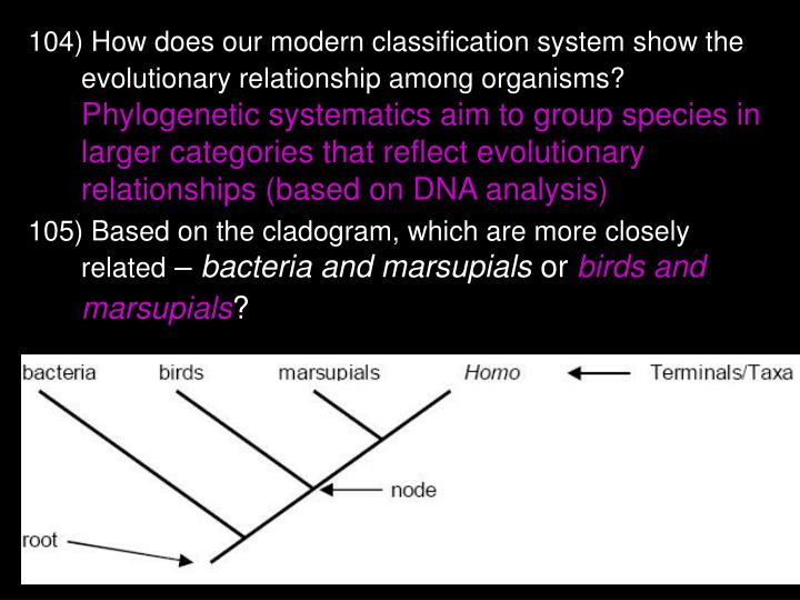 104) How does our modern classification system show the evolutionary relationship among organisms?