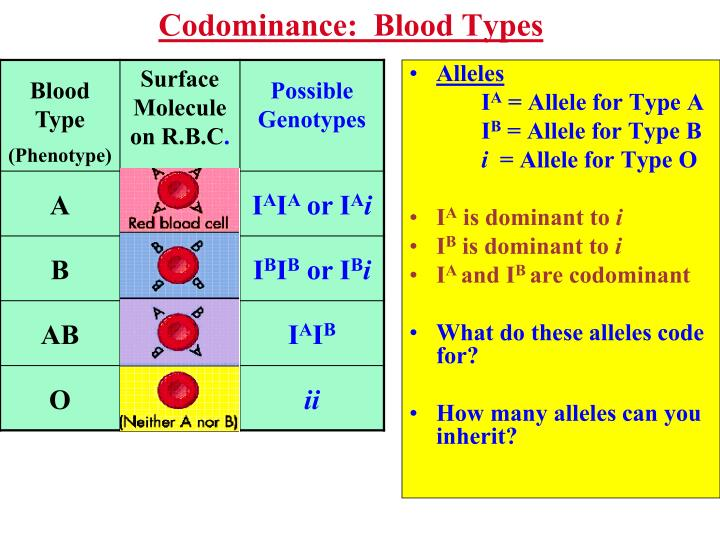 Codominance:  Blood Types