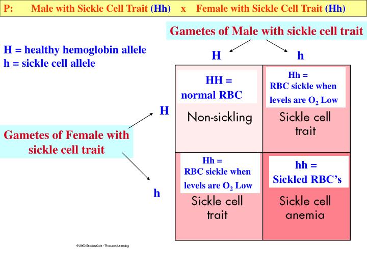 P:       Male with Sickle Cell Trait