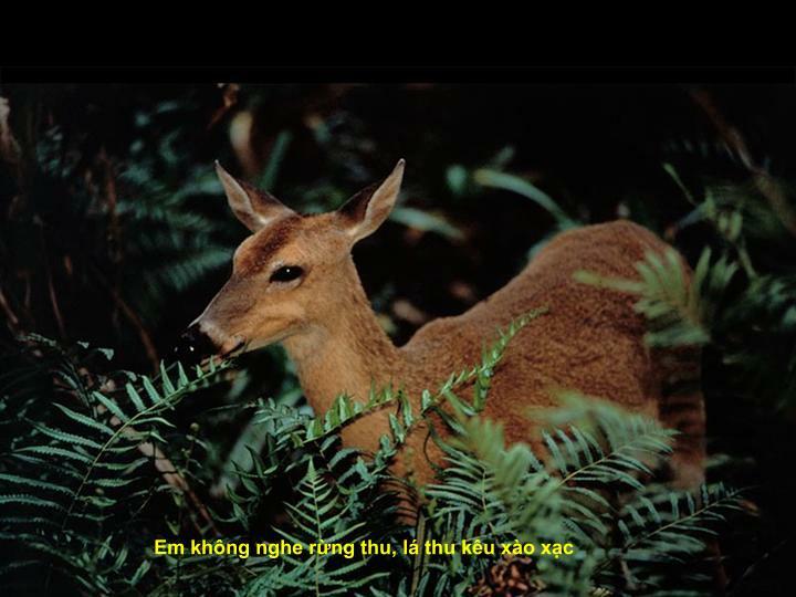 Em không nghe rừng thu, lá thu kêu xào xạc