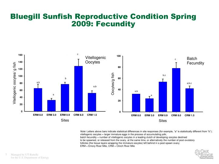 Bluegill Sunfish Reproductive Condition Spring 2009: Fecundity